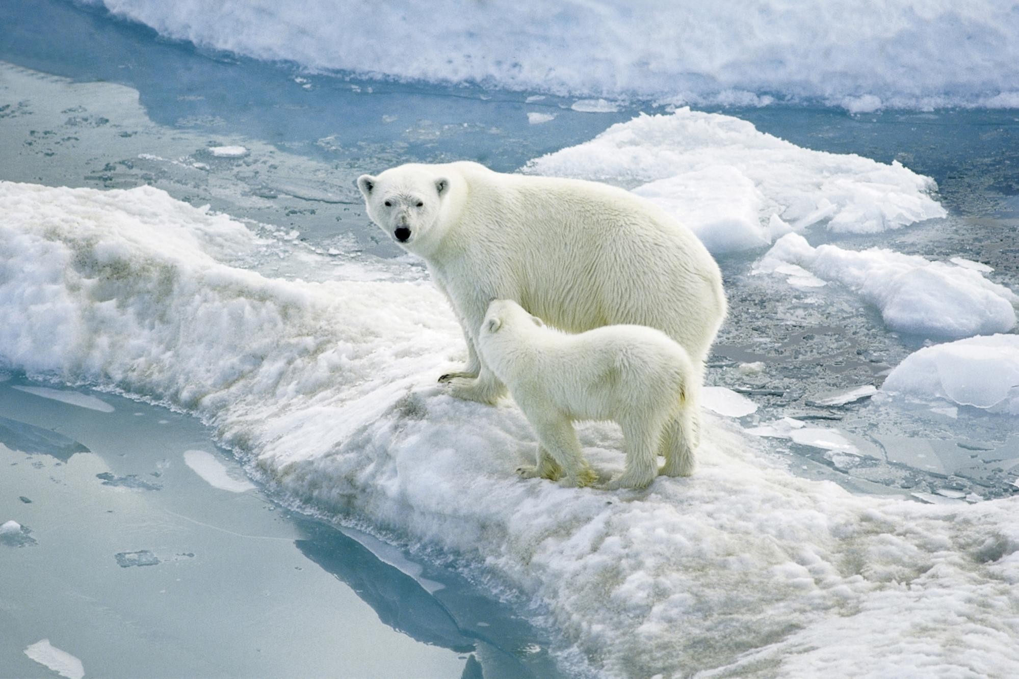 How Global Warming Affects Animals