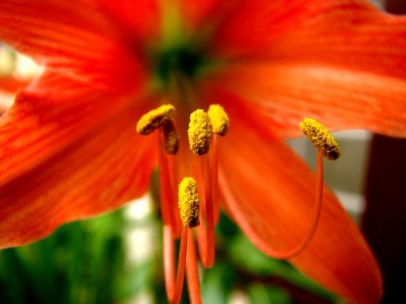 Easy Ways To Reduce Allergies