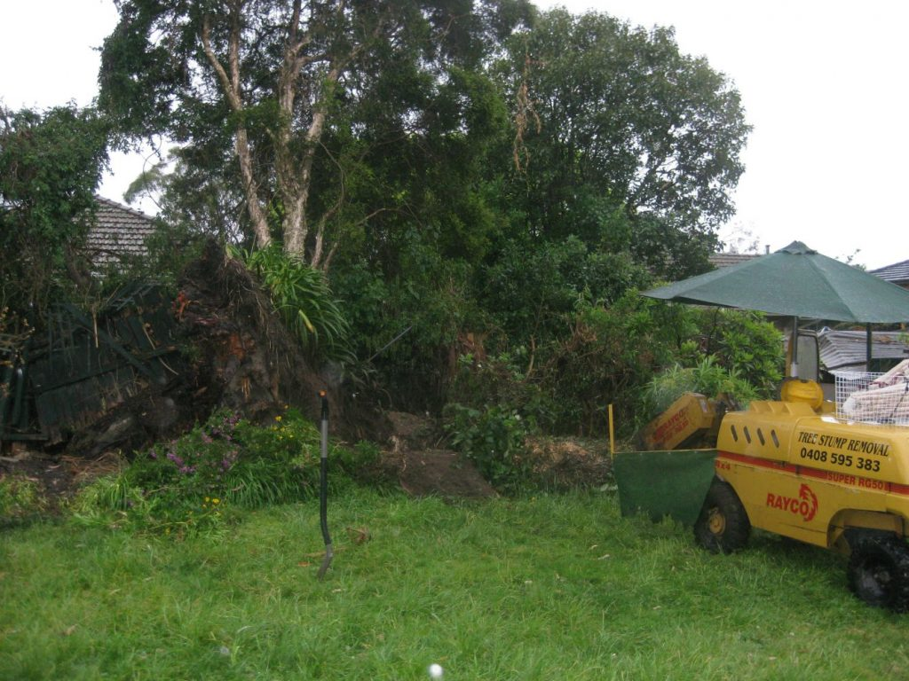 Necessity Of Stump Removal To Have Natural Garden In Your Home