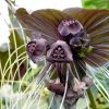 The Most Unusual Flowers In The World