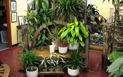 Common Indoor Tree Issues