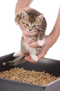 Health Risks of Toxoplasmosis and How to Prevent Them?