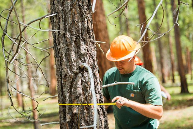 Why To Choose A Good Forestry Consultant?