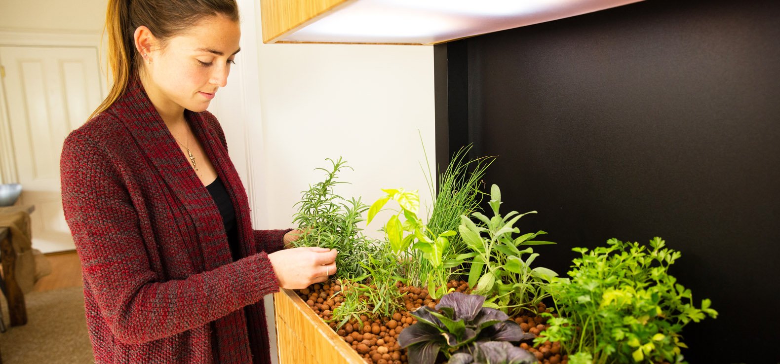 The Future Is Here: How Led Lights Revolutionized Indoor Gardening
