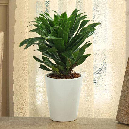 How To Clean Up The Indoor Air With Household Plants?