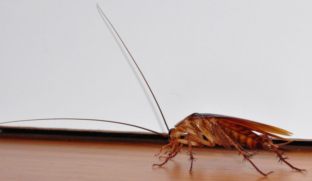 Is It Fight Or Flight Against Cockroaches In The Home