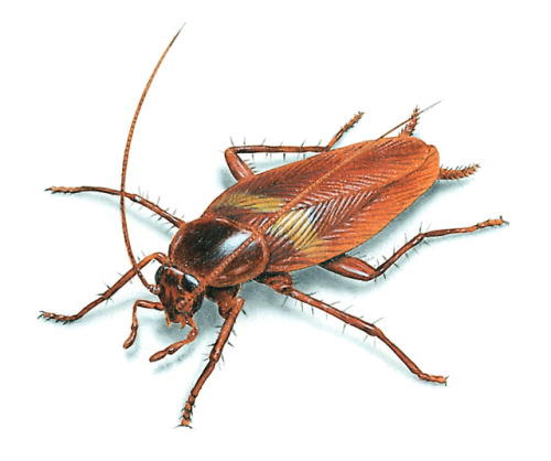 Are Cockroaches Running Amok In Your House