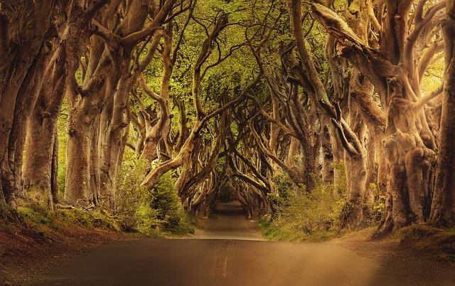 Dark Hedges - Games of Thrones