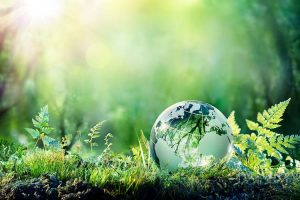 Green Living Basics - How to Lower Your Carbon Footprint